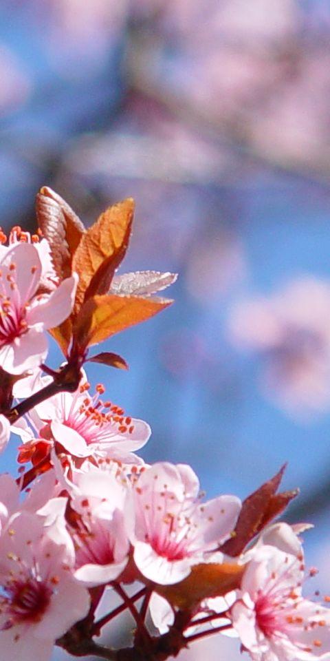 5=4 La magnifica fioritura delle mele