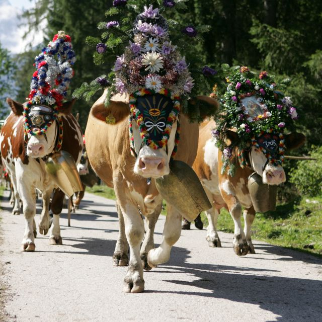Cattle herding week with an evening of traditional dress - 7 Nights