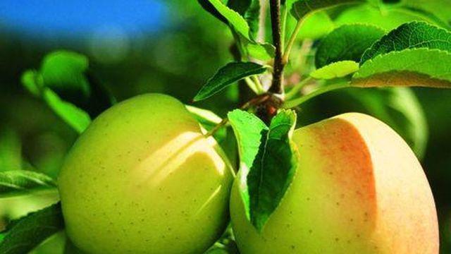 Apfelwoche im September