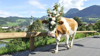 Kirchtag festival & cattle drive | 7 nights