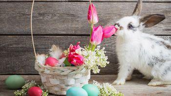 Offre de Pâques