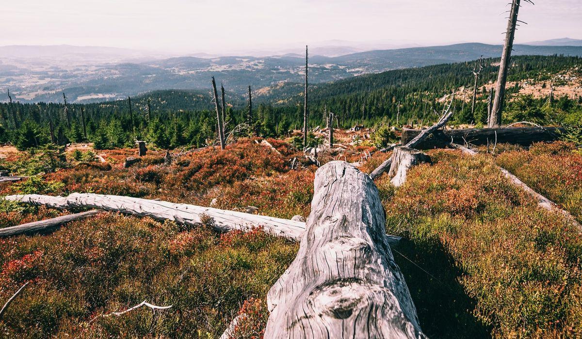 """Jubiläumsangebot """" 50 Jahre Nationalpark Bayerischer Wald"""""""