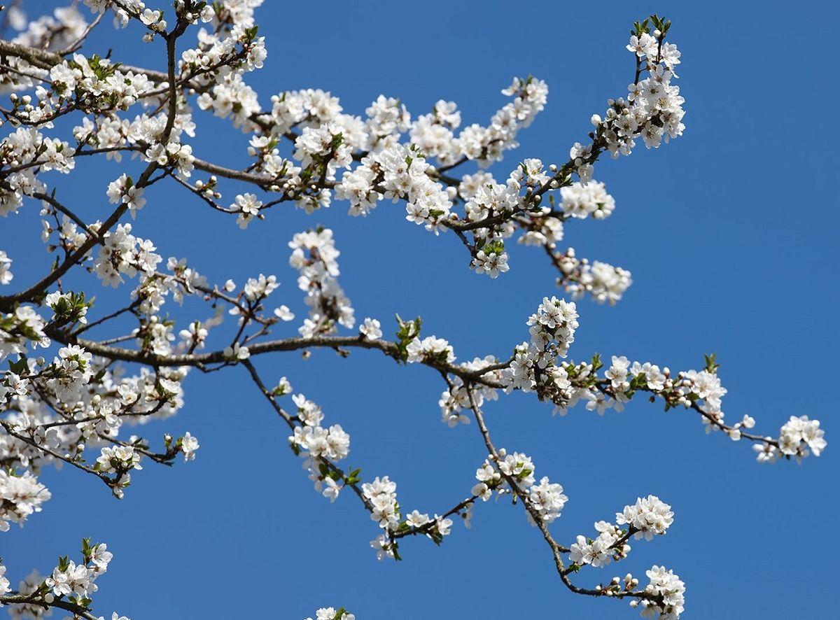 Blütenfesttage Lana
