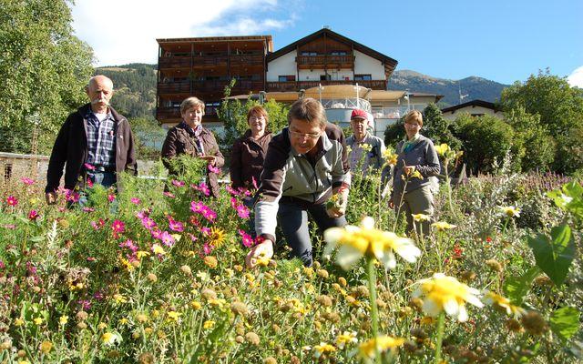 Biohotel Panorama: Kräuterwanderung