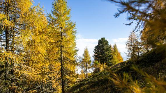 HerbstKlänge