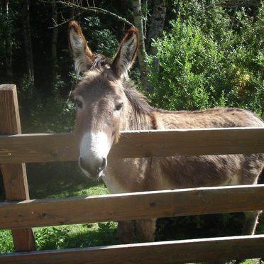 Ahornhütte, Esel