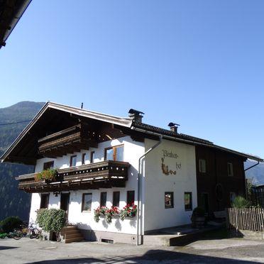 Summer, Plenkenhof, Neukirchen, Salzburg, Salzburg, Austria