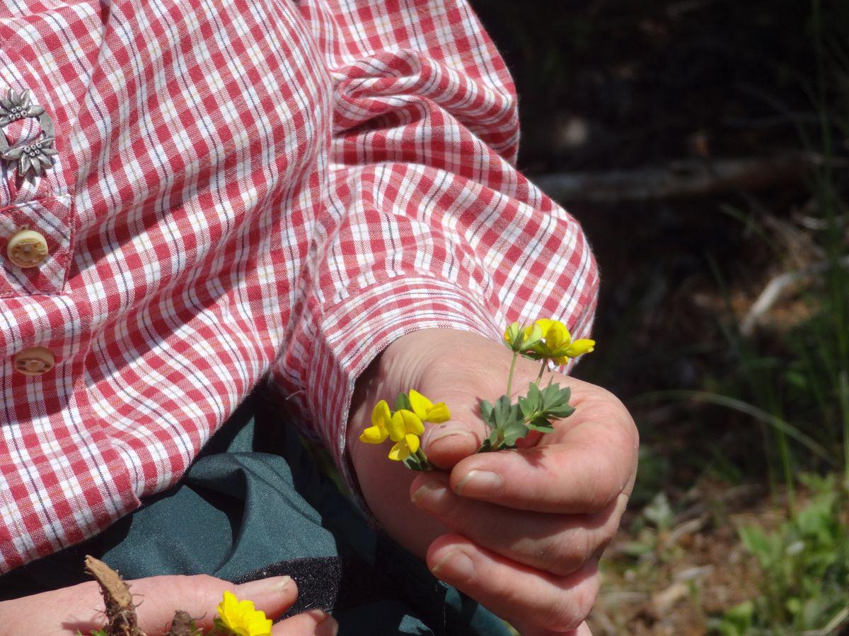 Frühsommer im Naturpark Kaunergrat