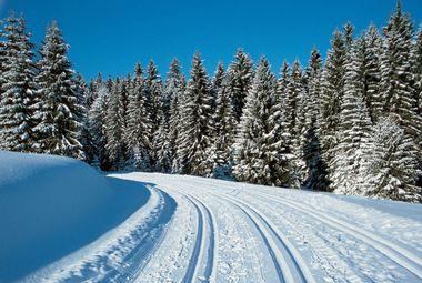 Schwarzwaldzauber im Winter