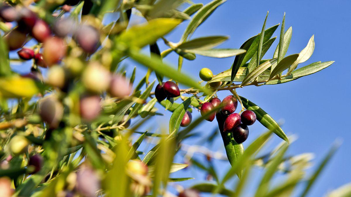SOMMER SPECIAL - Urlaub an der Quelle des Mani Olivenöls