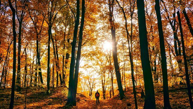 Herbstauszeit - 4 Tage bleiben, aber nur 3 bezahlen!