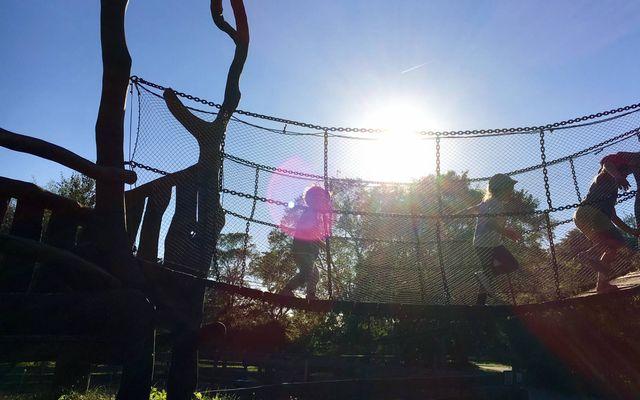 Biohotel Gut Nisdorf: Spielen auf der Hängebrücke