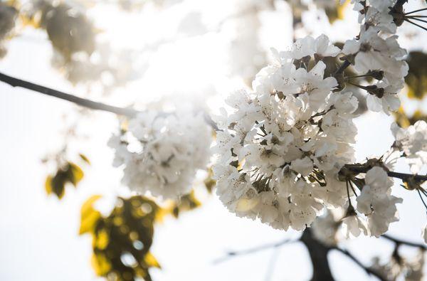 Blütenzauber | 3 Übernachtungen