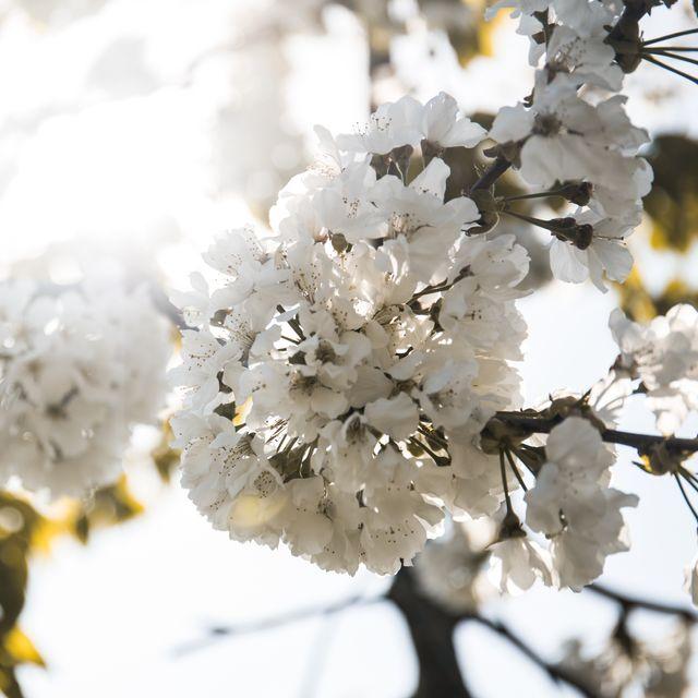 Blütenzauber - 3 Übernachtungen