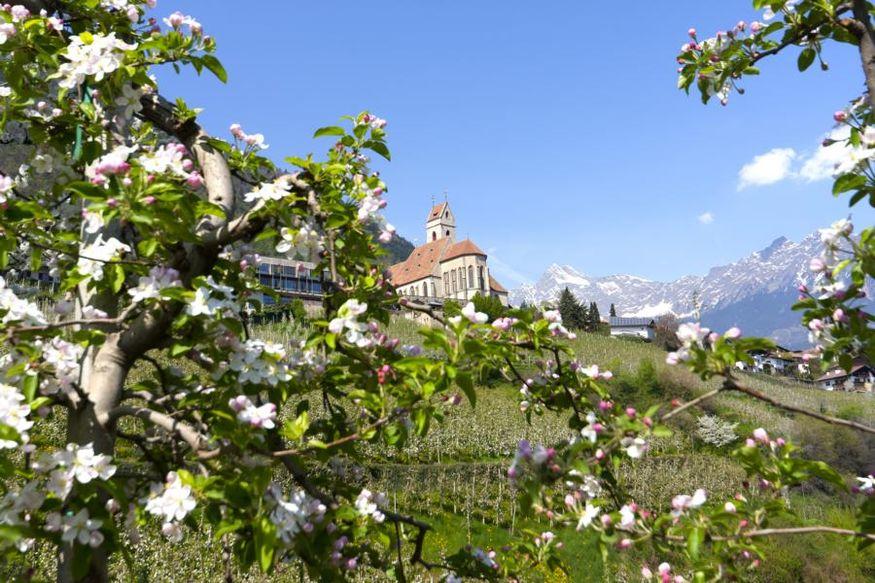 Apple Blossom Weeks