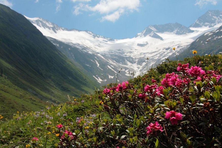 Frühling & Almrosenwandern | 3 Nächte
