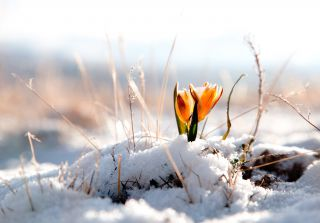Réveil du printemps | 5 nuitées du 10 mars au 17 mars 2019