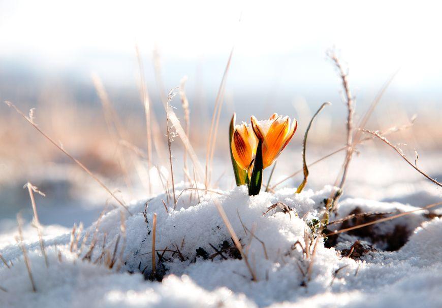 Réveil du printemps | 3 nuitées du 8 mars au 14 mars 2019