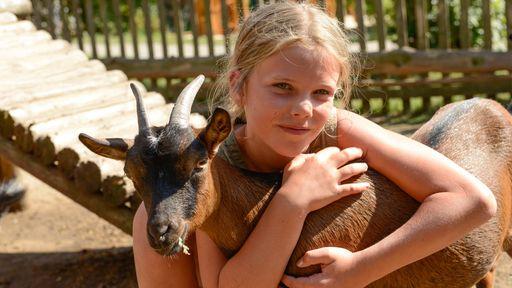Ziegengehege und Kleintier - Voliere mit lustigen Ziegen, Vögeln, Meerschweinen und Hasen.