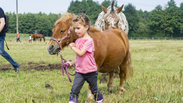 Reiterwochen für Kinder!
