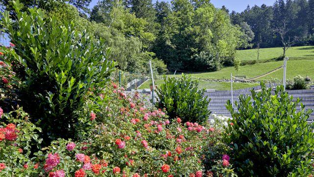 Rhododendren week