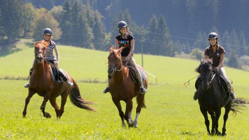 Genießen Sie in Ihren Reiturlaub im Petschnighof - Ein Gefühl des Einklangs zwischen Pferd und Mensch.