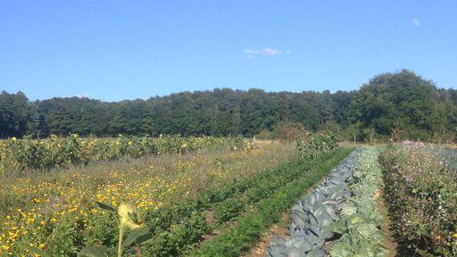 Biohotel Lindengut Fasten Woche Gemüsegarten