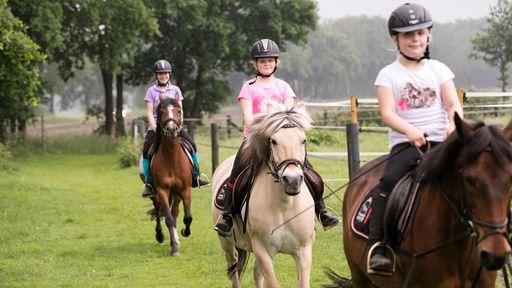 Wir haben einige Pferde, die sich auf einen traumhaften Ausritt mit unseren Gästen durch die Wälder freuen.
