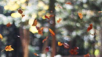 Raspl's Genuss-Herbst