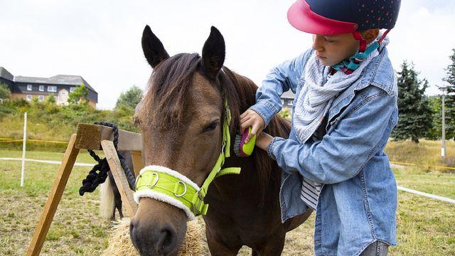 Ponytage im Elldus Resort