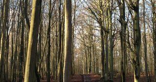 Wald rund um den Wolgastsee