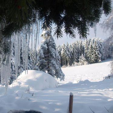 Surroundings, Holzfäller Hütte in La Rosiere - Vogesen, Vogesen, Alsace, FRANCE