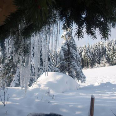 Umgebung, Kiefer Hütte , La Rosiere - Vogesen, Vogesen, Elsass, Frankreich