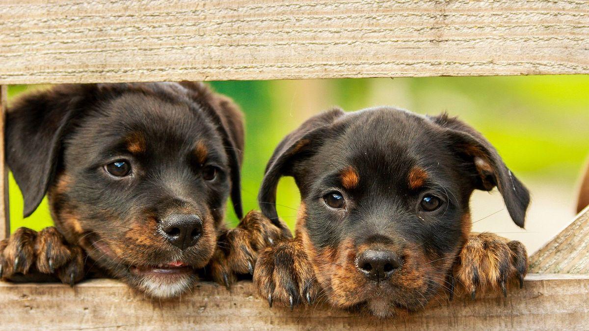 Pfotenclub - Urlaub mit Hund