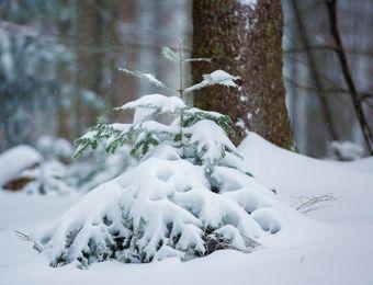Top Angebot: Winterruhe - wenn es still wird - Biohotel Schloss Kirchberg