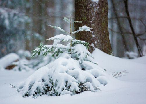 Winterruhe - wenn es still wird - Biohotel Schloss Kirchberg